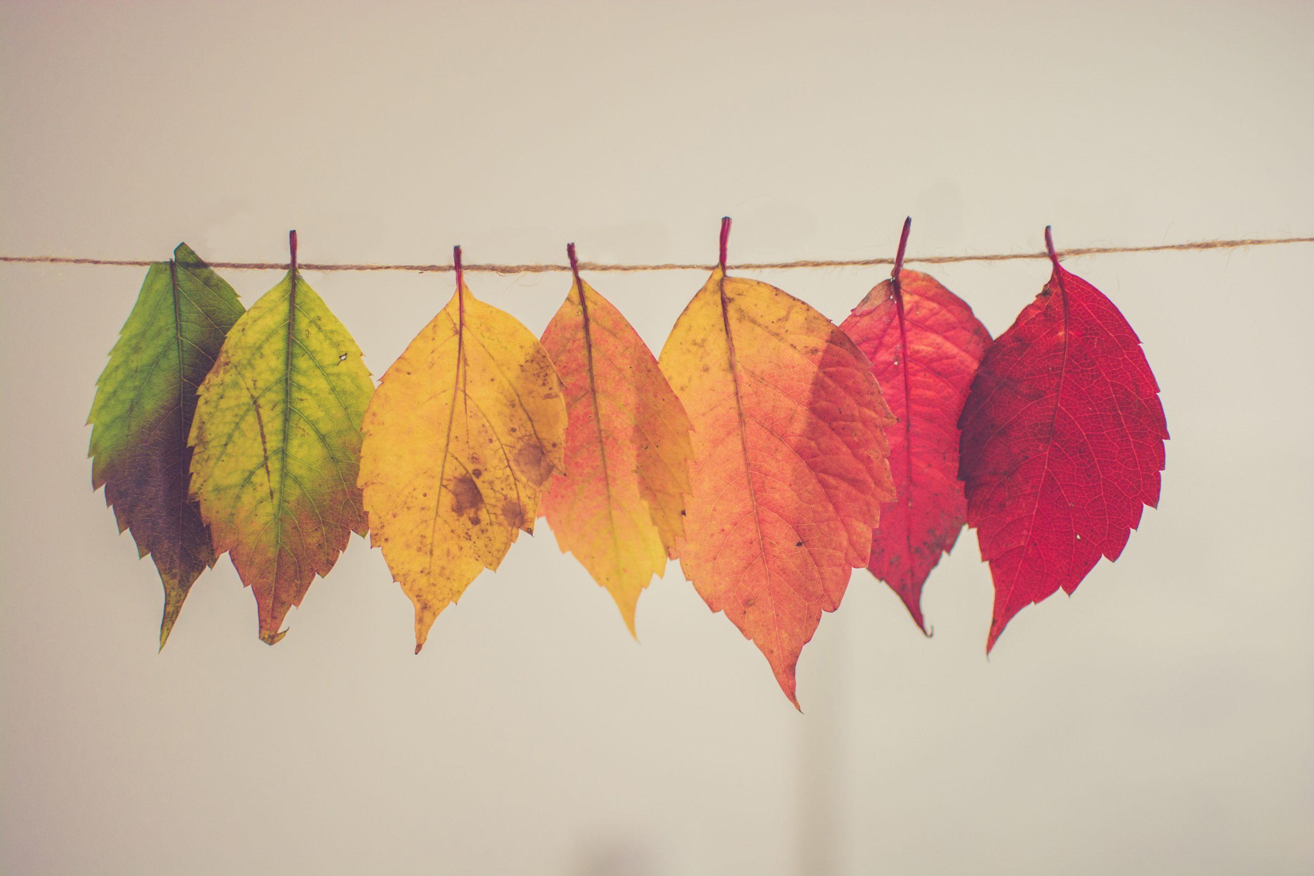 葉っぱが落ちる